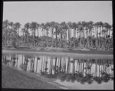 Glass Magic Lantern Slide AN OASIS WITH PALM TREES C1900 PHOTO EGYPT