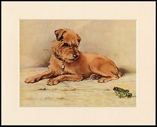 BORDER TERRIER AND SMALL GREEN FROG CHARMING DOG PRINT MOUNTED READY TO FRAME