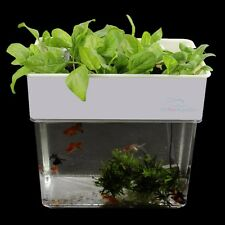 Aquaponics Fish Tank Plant Farm Water Hydroponics Ecosystem Similar to AquaFarm