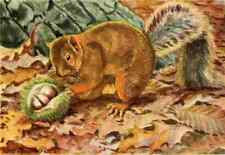 A4 Photo Fuertes Louis Agassiz 1920 Red Squirrel 1 Print Poster