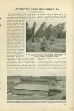 1921 Magazine Article Harvesting Hops om the Pacific Coast Beer Making Brewing