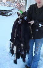"""Tanned Skunk Pelts, unusual white patches, large 30""""+ tip to tip. minwt30+"""