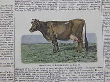 The Cultivator & Country Gentleman, in-text illustration #21 Jersey Cow
