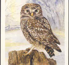 "MINT...!..""LITTLE OWL"" WATER COLOUR BY AUDREY GLASS,1992,BIRD MODERN POSTCARD"