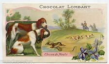 CHOCOLAT LOMBART. Chien de meute . Chasse . Dog hunter
