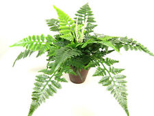 Potted Artificial Silk Brake Fern (Pteris) with Runners