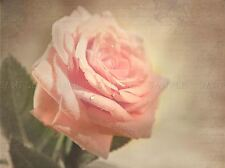 PINK ROSE SEPIA GRUNGE PHOTO ART PRINT POSTER PICTURE BMP1301A
