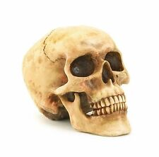 Realistic Replica Human Skull Halloween Decoration Home Statue Gift Spooky Decor