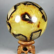 798g Polished DRAGON SEPTARIAN sphere Crystal w/Rosewood Stand Madagascar