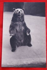 ZOO DE VINCENNES PARIS UN OURS GRIZZLY DRAEGER
