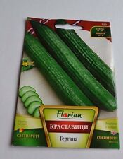 GERGANA CUCUMBER - CUCUMIS SATIVUS BULGARIAN  VEGETABLE apx  70 SEEDS  long