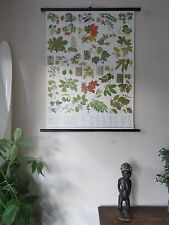 VINTAGE PULL  ROLL DOWN BOTANICAL SCHOOL WALL CHART  POSTER OF TREES & LEAVES