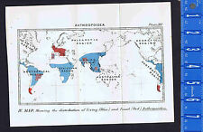 Antique 1897 Map Living & Fossil Anthropoiden Monkey