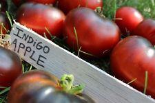 INDIGO APPLE Tomato Seeds - 50 Seeds