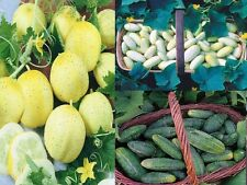MINIATURE CUCUMBER COLLECTION THREE HEIRLOOM VARIETIES IN ONE DEAL 15 SEEDS