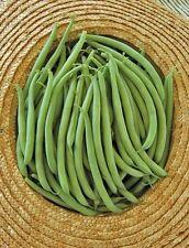 African BOBBY FAGIOLI GOURMET qualità stringless FILET fagioli 50 semi freschi