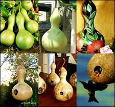 Tribal Bottle Gourd Seed Cute For home Décor Bird Home Natural Young Fruit Veget