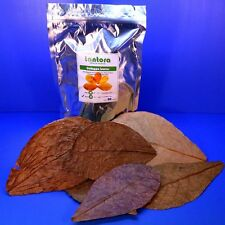 50pc 18~31cm Catappa Leaves Grd A Indian Almond Leaf KETAPANG betta/discus CRS
