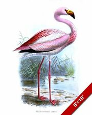 PINK FLAMINGO BIRD VINTAGE IN WILD DRAWING PAINTING ART REAL CANVAS GICLEE PRINT