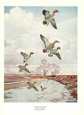 "1957 Vintage FRANCIS LEE JAQUES ""GREENWING TEAL DUCK"" Color HUNTING Lithograph"