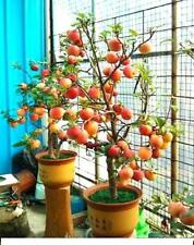 4 fruit TREES~Apple tree,Plum tree,Cherry tree,Sloeberry,ideal patio,pots,garden