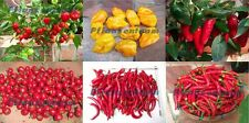 Chili Mix - 6 Sorten, Habanero, Big Sun, Thai, Jalapeno, Cherry Bomb - M01