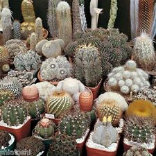 10 cactus seeds mix *Easy grow * Care free *  SF 3984