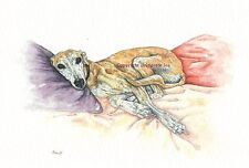 Whippet greyhound Dog  Watercolor/ink  painting Dogs By Bridgette Lee