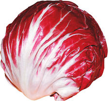 Round Chicory Seed 30 Seeds Leaves Ball Cichorium Intybus Vegetable Seeds C058
