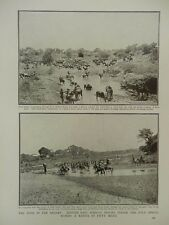 1916 EAST AFRICA WATERING HOLE OASIS IN THE DESERT WWI WW1