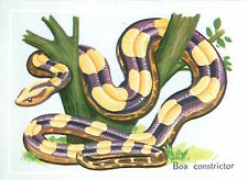 IMAGE CARD 60s Boa constrictor (constricteur) Red-tailed Boa devin Aviosa Boidae