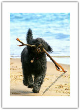 Greetings Card Birthday / Blank Notelet - Dog Labradoodle Pet Beach Stick Games