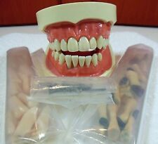 Nissin Kilgore Typodont TRM-134 W/ Extra Teeth & Screws. Free Shipping !