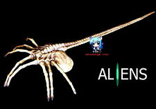 Movie Alien Face Hugger 1/1 Vinyl Model Kit M 44""