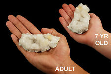 "Keokuk Geode 3"" 3-6 Oz Rock and Mineral Crystal Specimen Gemstone"