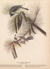 """1942 Vintage AUDUBON BIRDS #39 """"TUFTED TITMOUSE"""" Full Color Art Plate Lithograph"""