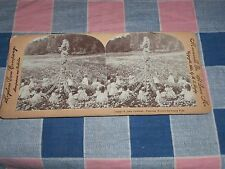 Keystone Stereoview  11404 A June Carnival Dancing Round the Daisy Pole