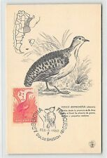 ARGENTINA MK 1960 FAUNA VÖGEL BIRDS MAXIMUMKARTE CARTE MAXIMUM CARD MC CM d9587
