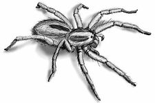 Hairy Big Spider Temporary Fake Tattoo Halloween Transfer Waterpoof Art Arachnid