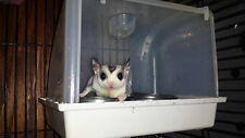 SUGAR GLIDER THE BEST FEEDING STATION CONTAIN THE MESS!  ONLY HERE! JUST IN!