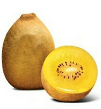 10 FRESH GOLDEN KIWI FRUIT VINE SEEDS/TROPICAL