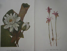Set of 18 Vintage Mary Walcott Wildflower Prints - Orchids Colombine Mistletoe