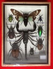 REAL EXOTIC HUGH 9 INSECT DISPLAY TAXIDERMY ENTOMOLOGY SCORPION BEETLE INSECTS