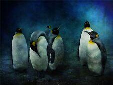Art Imprimé Poster Photo Animal Pingouin Neige froid groupe lfmp0462