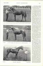 1896 Horse Race Keele Hall Courts Of Molly Lepel Yesterling Black Bryony