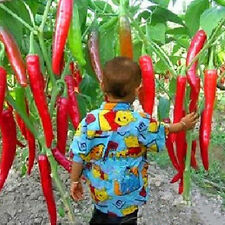 20Pcs Home Garden Rare Giant Spices Red Spicy Chili Pepper Seeds Vegetable Plant