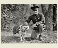 1st Marine Corps Mascot Dog PHOTO Sgt Major Jiggs, English Bulldog USMC