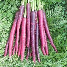 Carrot Seeds - 'Cosmic Purple' ( 1000 SEEDS ) Heirloom Vegetable