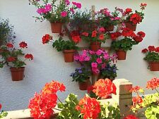 "12 Plant Pot Holders/Hangers,To hang 5"" Plant Pots on Trellises or Battens,green"