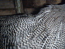 40 mixed/larger barred plymouth rock, chevron cock hackles,  fly tying,sea trout